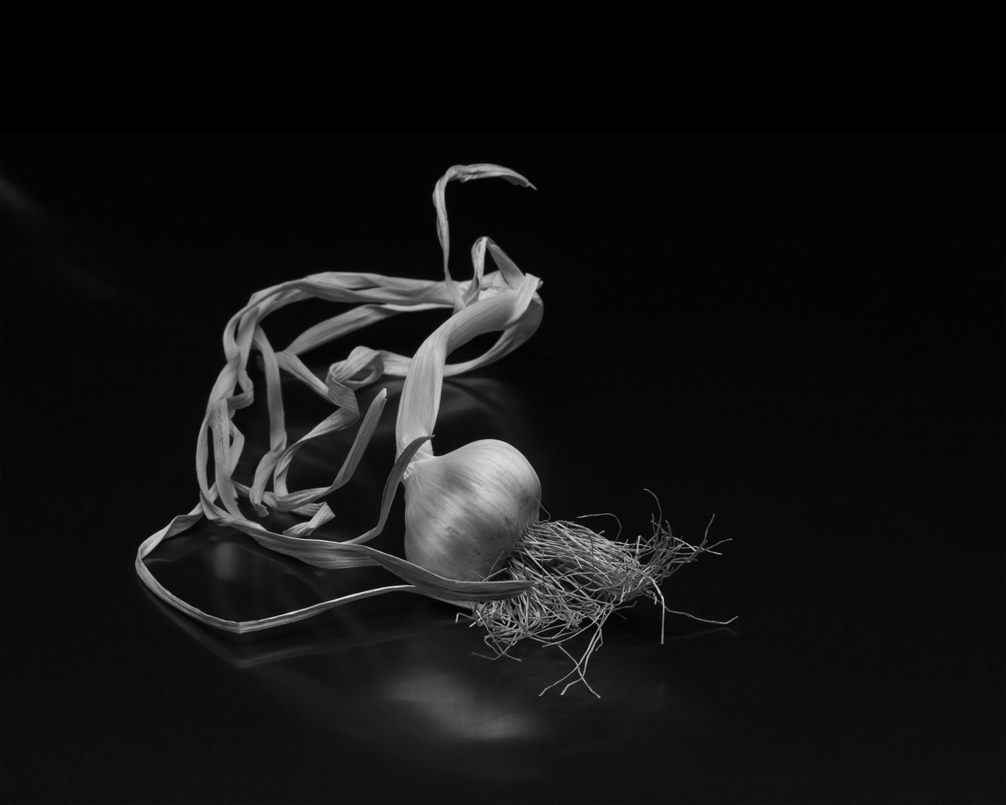 garlic as art, Rose Hodges Food Photography San Francisco