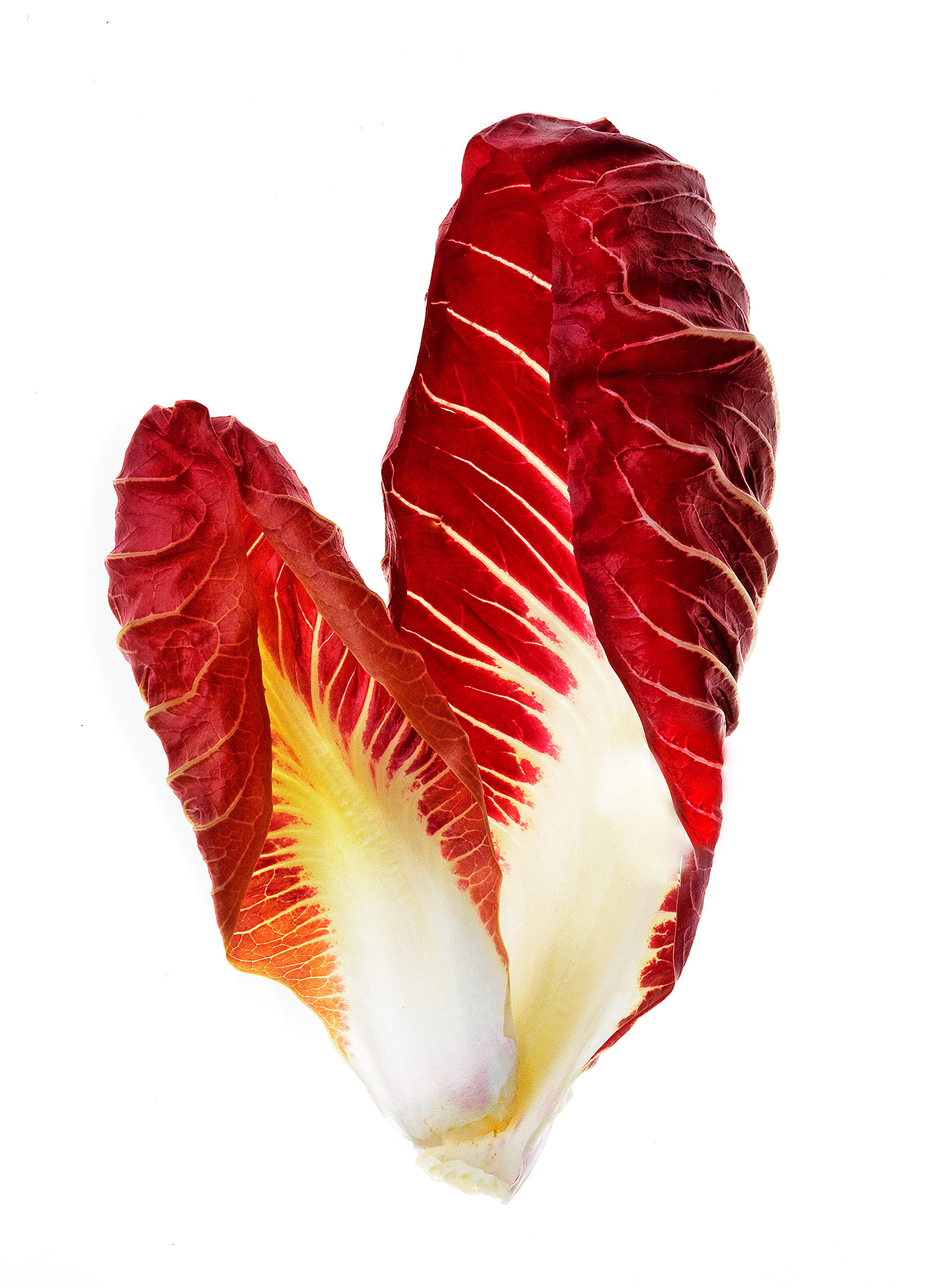 red radicchio, Rose Hodges Food Photography San Francisco