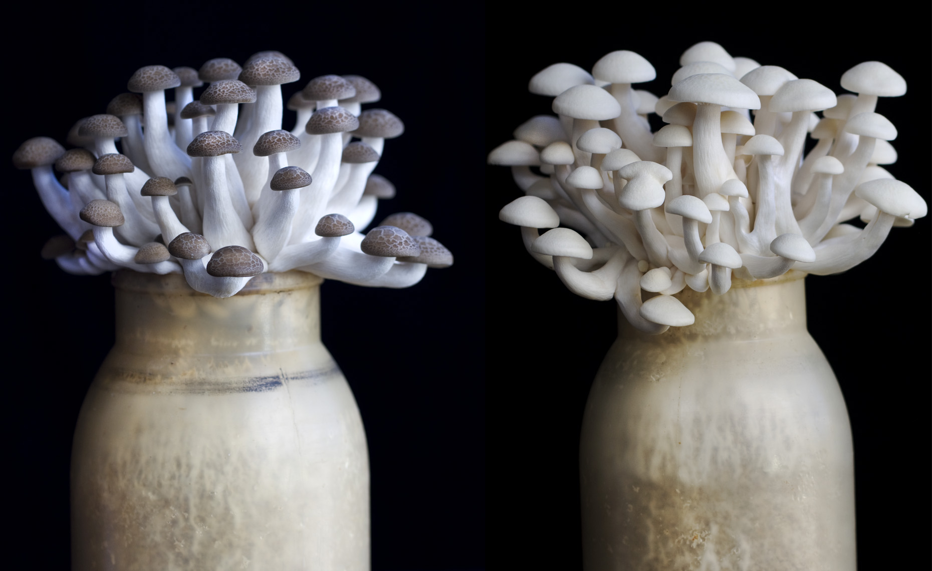 san francisco food  photographer, New York, mushrooms
