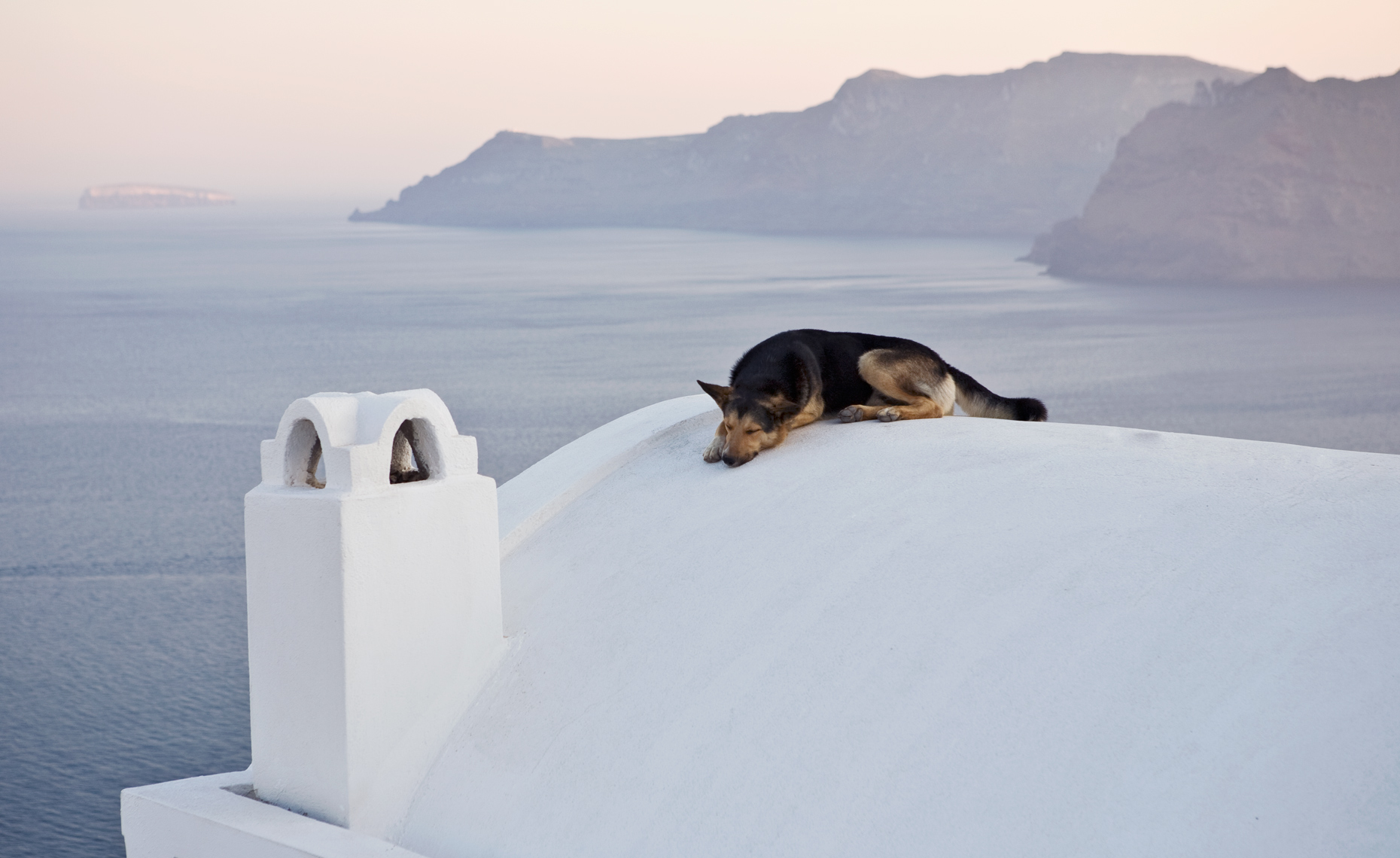 Travel_DogSantorini