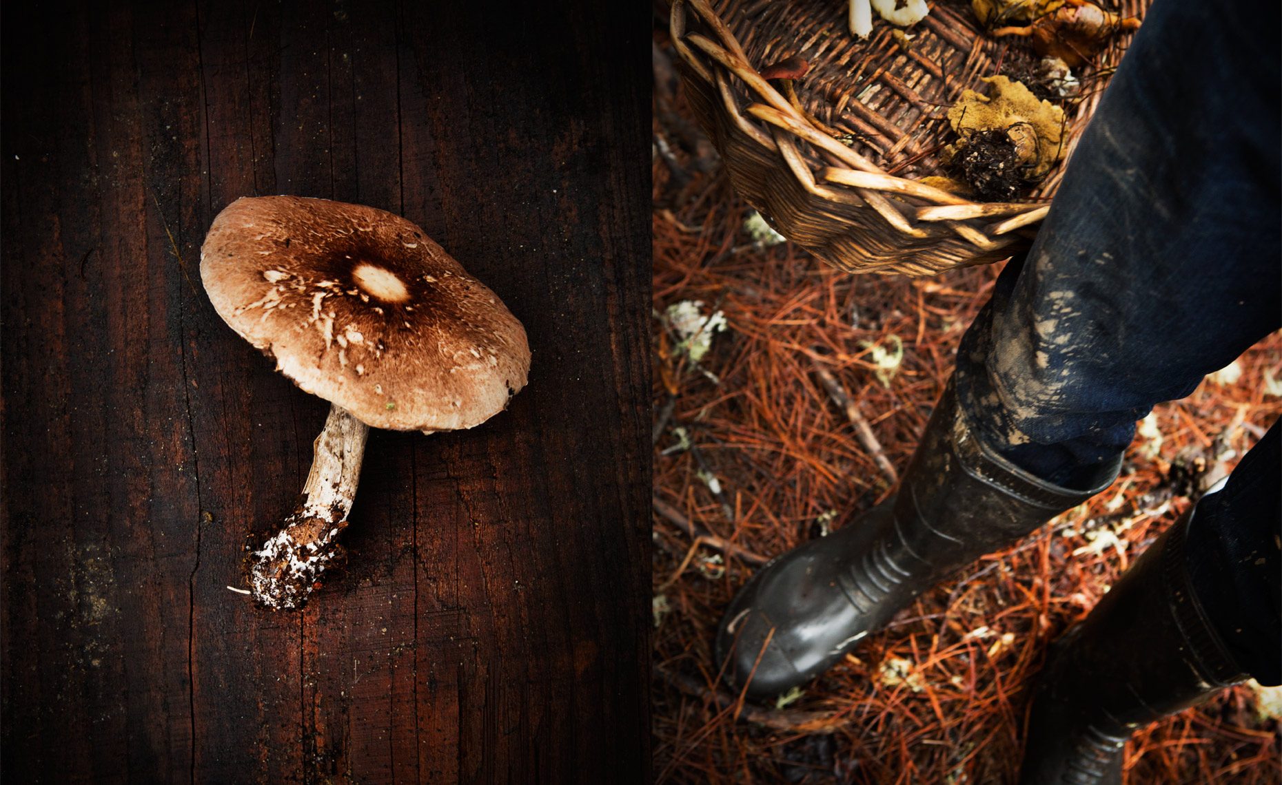 san francisco food photographer, mushroom hunt