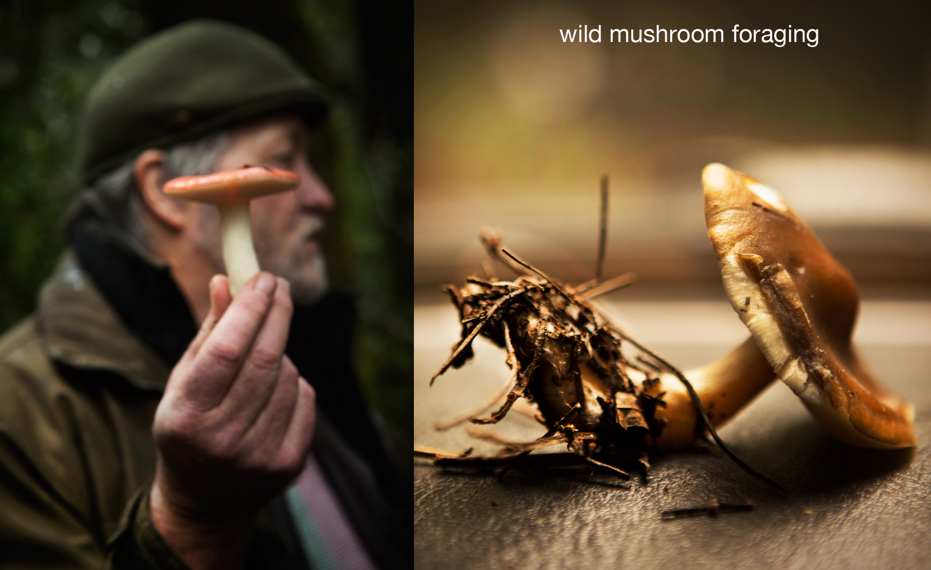 food photography san francisco, mushroom forage